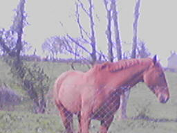 Horse at Searce